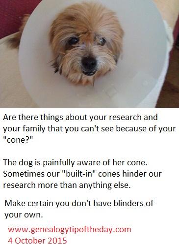 dog-blinders